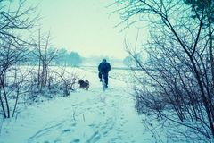 Man ride bicycle in snowy winter stock photos