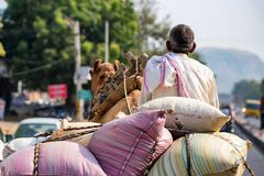 Man rides camel in India back view Royalty Free Stock Photography