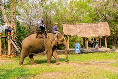Man rides elephant on path at countryside, mahout ride this animal for travel, Viet Nam Stock Photography