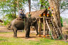 Man rides elephant on path at countryside, mahout ride this animal for travel, Viet Nam Royalty Free Stock Photo