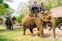 Man rides elephant on path at countryside, mahout ride this animal for travel, Viet Nam Royalty Free Stock Images