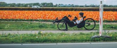 Man ridiing av en tillbakalutad cykel, tulpanbakgrund nära Keukenhof Royaltyfri Bild
