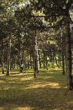 A man riding a bicycle in a forest. Close up background royalty free stock photo
