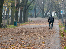 Man riding bicycle in park in autumn Royalty Free Stock Photography