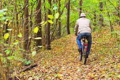 Man is riding a bike in autumn forest Royalty Free Stock Image