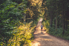 Man riding a bike in forest Royalty Free Stock Images
