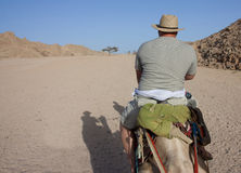 Man riding a camel viewed from behind Stock Photography