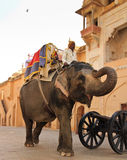 Man riding elephant. JAIPUR, INDIA, MARCH 3: An unidentified man riding an elephant into Agra Fort on March 3, 2012 in Jaipur, Rajasthan, Northern India. Amber Stock Image