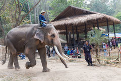 Man riding elephant in the park Stock Images