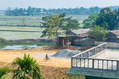 Man riding his bicycle among rice fields in Assam India royalty free stock photo