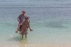 Man riding his horse in the shallow water on an indonesian island. A man riding his horse in the shallow blue and green tropical water at Gili Trawangan stock photos