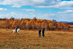 A man riding a hores. The photo was taken in Saihanba tree farm Chengde city Hebei province, China stock photography