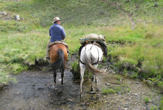 Man riding horse. The man from Snowy Mountains riding a horse Stock Image