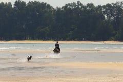 Man Riding Horse on beach  ocean wave and dog running follow. Water splat with fun Stock Photos