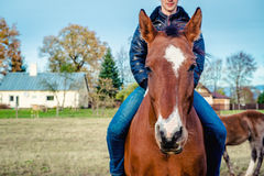 Man riding on a horse Stock Images