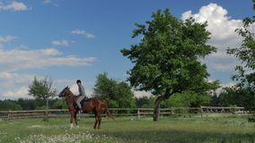 The man riding on the horse on green meadow stock footage