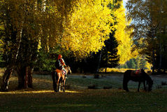 A man riding a horse in romantic forest Royalty Free Stock Photography