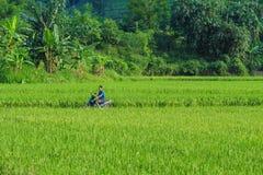 A man riding motorbike on rice field in Hanoi, Vietnam Stock Photo