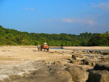 Man riding an ox cart by the beach Royalty Free Stock Images