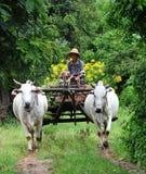 A man riding ox cart on rural road in Bagan, Myanmar Stock Photos