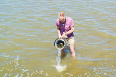Man rinsing collected mussels in bucket standing in shallow wate. Senior man rinsing collected mussels in bucket standing in shallow water at low tide, Waddensea Stock Photography