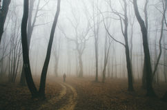 Man on road in dark forest with fog Royalty Free Stock Images