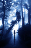 Man on road in foggy forest Stock Images