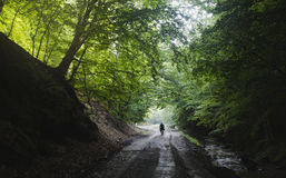Man on road in green natural forest in Transylvania Royalty Free Stock Photos