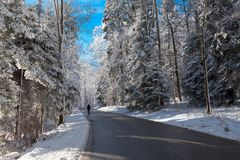 Man on the road in snowy forest royalty free stock image