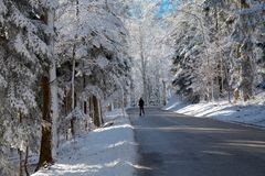 Man on the road in snowy forest royalty free stock photography
