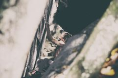 Man rock climbing Royalty Free Stock Images