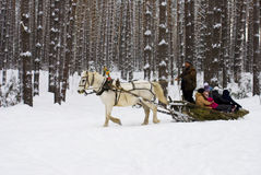 The man rolls the children on a sled in the winter woods Royalty Free Stock Photo