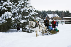 The man rolls the children on a sled in the winter woods Stock Photography