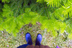 Man in rubber boots standing near fir tree. Man in rubber boots cost about conifer Stock Photos