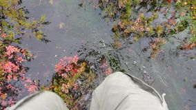 Man in Rubber Rain Boots Walking Thru Water Pond in Autumn Rainy Day. 4K, Slowmotion pov. Karelia, Russia. Man in Rubber Rain Boots Walking Thru Water Pond in stock video