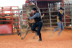 Man running from bull at the rodeo Royalty Free Stock Image