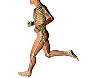 Man running skeleton x-ray Stock Images