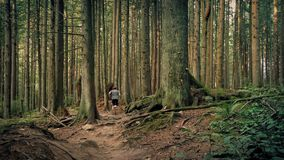 Man Running On Trail Through Tall Trees stock footage