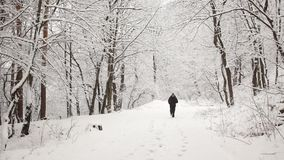 Man running during a winter day. Man exercising in the park during a winter day stock video footage