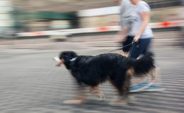 Man runs with his dog outside Stock Images