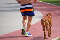 Man runs with his dog on the running track. Outdoor Stock Photos
