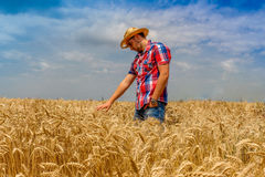 Man in rye field on the blue cloudy sky Royalty Free Stock Photos