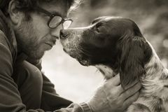 Man`s affection for his english setter dog in black and white. In the woods Stock Photos