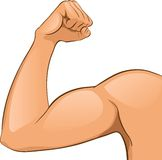Man's Arm muscles. Vector Illustration. Helthcare. Abstract royalty free illustration