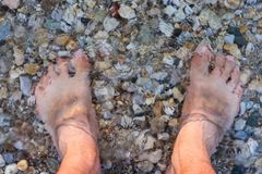 Barefoot Man Sank in the Water on the Rocky Beach. Man`s Bare Feet Sank in the Water on the Rocky Beach Stock Photo