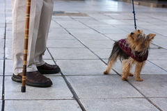 Man's best friend. A cute small dog looking with love at its owner Stock Photo