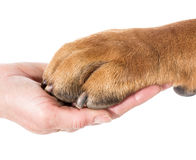 Man's best friend Royalty Free Stock Images