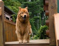 Man's best friend. Stock Photo