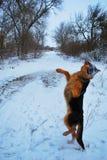 Man& x27; s beste vriend, huisdier, grappige hond, slim dier, Royalty-vrije Stock Afbeelding