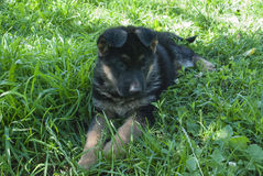 Man& x27; s beste vriend, huisdier, grappige hond, slim dier, Royalty-vrije Stock Afbeeldingen